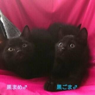 黒まめ&黒ごまちゃん兄弟