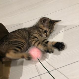超癒し系 仔猫