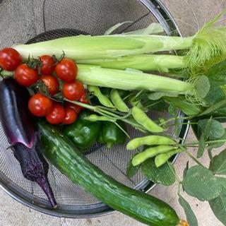 家庭菜園を始めませんか?小牧市横内の貸農園がオープン