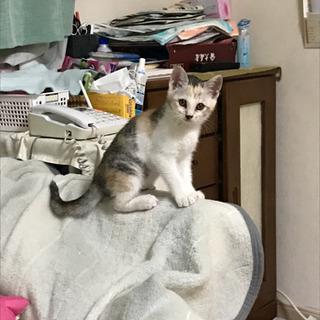 子猫2匹います。里親になって下さい。