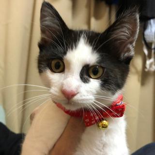 生後半年の猫さんです。