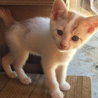 01沖縄本島内つれて行きます。保護した子猫合計6匹里親募集。獣医...