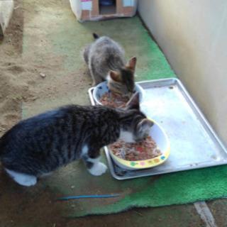 可愛い仔猫2匹の里親募集です。