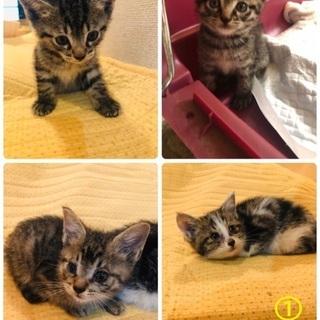 子猫4匹の里親さんを募集中です!