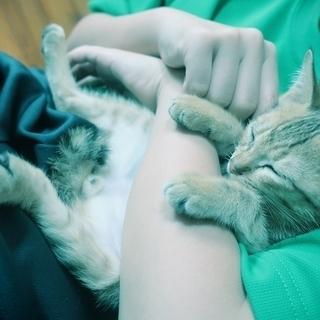 仮名「ちくわ」 甘えたさんの茶トラ仔猫 (生後2ヶ月程度?)