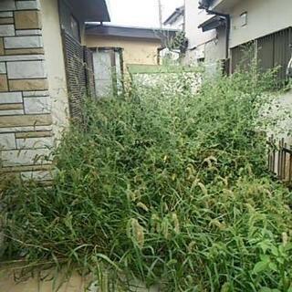 【空き家のお庭の管理】草むしり、草刈り、剪定、伐採などを格安で対...