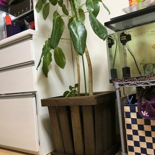 🉐植木鉢用のケース(キャスター付)