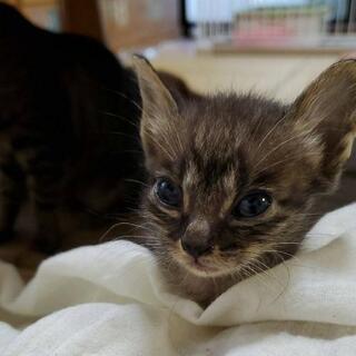 とっても小柄なキジ猫の男の子の画像
