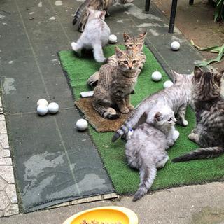 生後2ヶ月半の子猫7匹の里親募集しています。