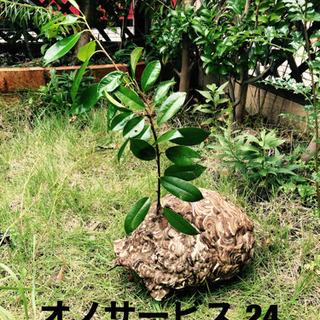 名古屋市緑区  愛知県全域、蜂の巣撤去、蜂駆除、ヘビ駆除、コウモリ駆除