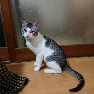 スリムで上品な子猫