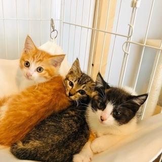 丸顔美猫3兄妹
