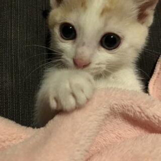 子猫の里親募集しています!7月12日譲渡会があります。