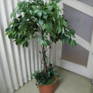 ベンジャミン造花観葉植物