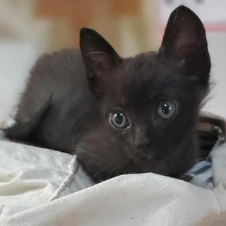 元気で懐っこい黒猫ちゃん、里親募集!!!
