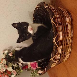 今年のGWに産まれたばかりの子猫ちゃん。里親さん募集中!!