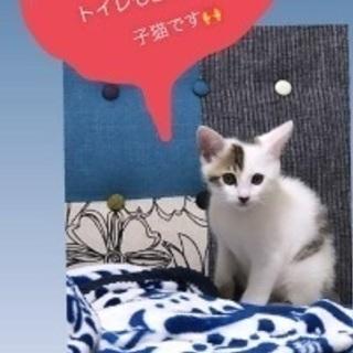 可愛い子猫ちゃん🐱