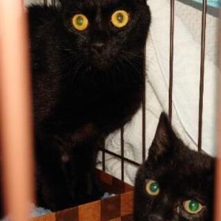 保護猫6匹(子猫3匹)