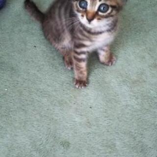 保護子猫② (片目結膜炎)女の子 生後1ヶ月半