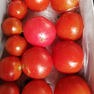 朝とりの甘いトマト、野菜セット(長茄子、大葉、キュウリ、インゲン)