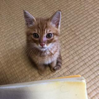 ☆2ヶ月の子猫の里親募集☆