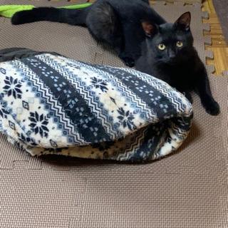 去年の4月生まれの猫ちゃん🐱