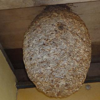 蜂駆除、シロアリ駆除、ゴキブリ駆除等の害虫駆除なら【街の便利屋へ♬】