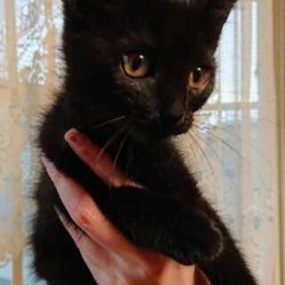 しゃーちゃん!黒猫女子