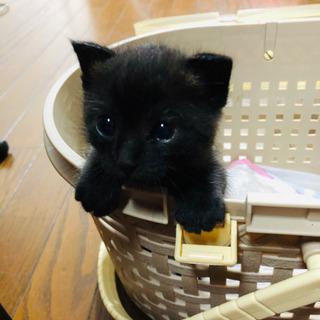 コロコロした可愛い黒猫ちゃん