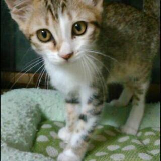 子猫の里親さん募集(決まりました)
