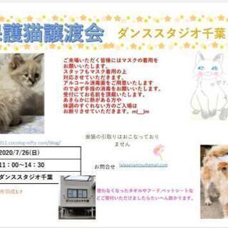 保護猫譲渡会