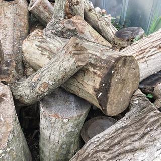 木の丸太や枝など!イスや薪にいかがですか?