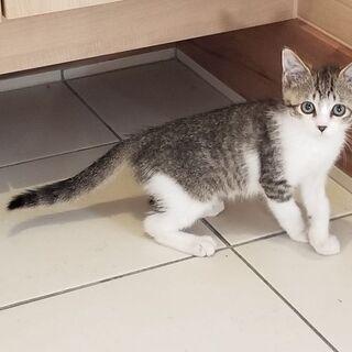 広島県で子猫の里親募集