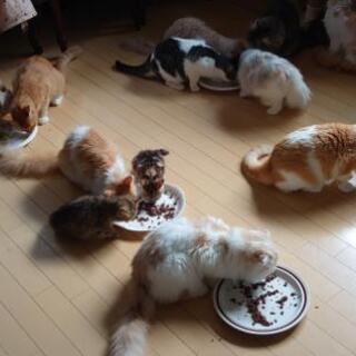 『猫たちのトイレ掃除とお世話』