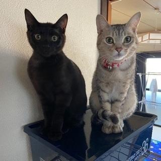 人懐っこい猫たちです。