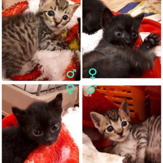 愛護センター引き出しの子猫ちゃんズの画像