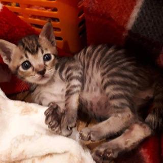 愛護センター引き出しの子猫ちゃんズ - あま市