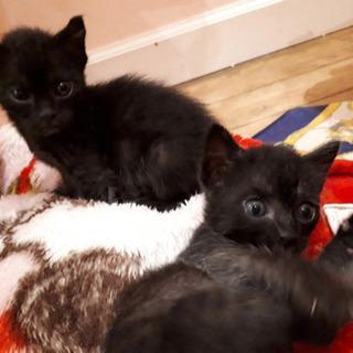愛護センター引き出しの子猫ちゃんズ - 猫