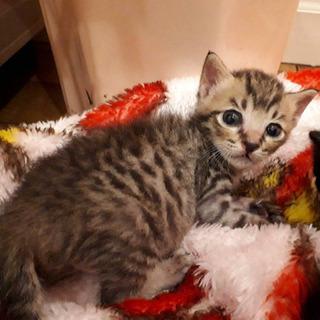 愛護センター引き出しの子猫ちゃんズ − 愛知県