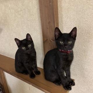 人が好き2ヶ月弱おしゃれな黒猫兄妹