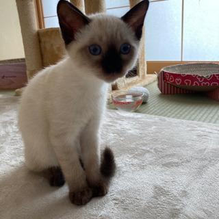 生後3ヶ月の美猫ちゃんです❗の画像