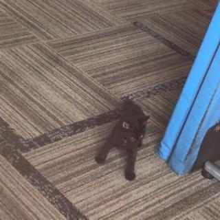 真っ黒の子猫