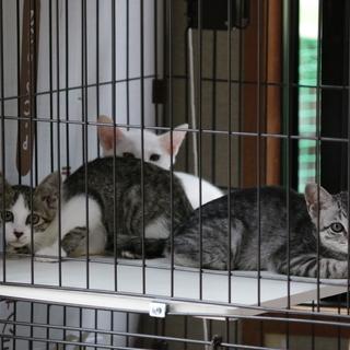 子猫、3匹の里親さん募集です。