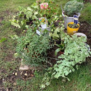 鉢植え花、観葉植物1鉢無料