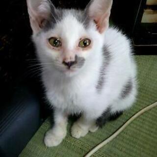 3ヶ月ほどの子猫です!∩(^ΦωΦ^)∩