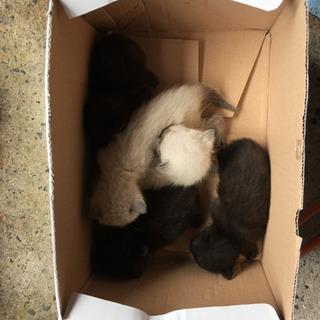 生まれたて2週間くらい黒3匹白2匹