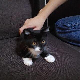 2ヶ月子猫