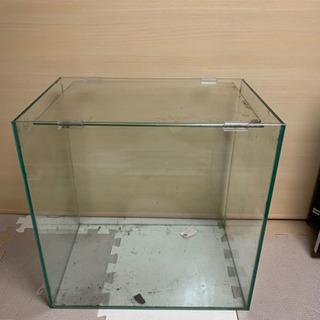 ADA水槽 アクアリウム 熱帯魚