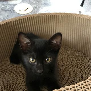 幸運の黒猫かぎしっぽ‼️の男の子