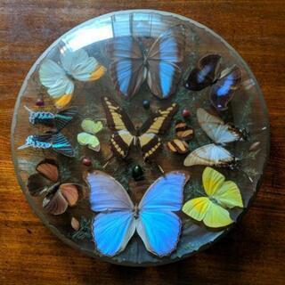 (取引中)蝶の飾り物